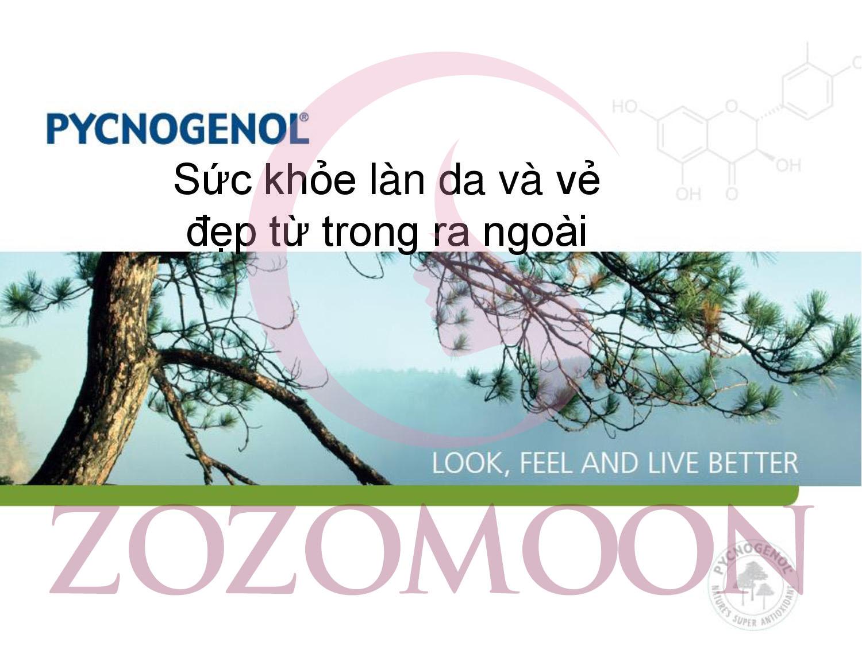 Pycnogenol là gì ? Công dụng của Pycnogenol là gì ?